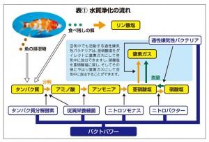 月刊錦鯉投稿分 (3)